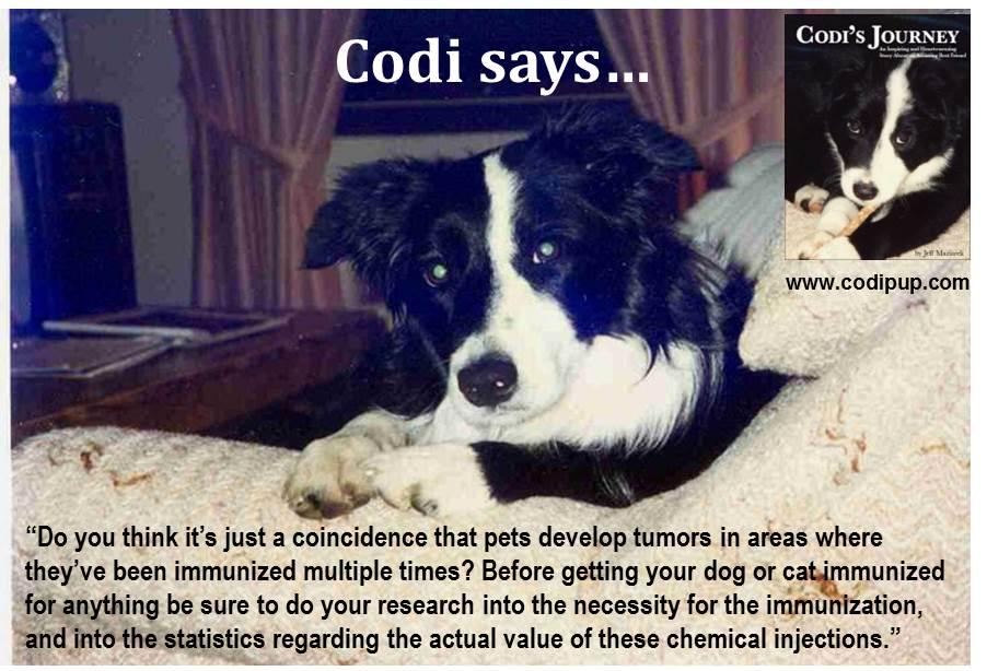 Codi says graphic 8